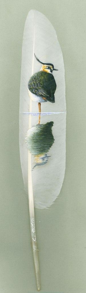 Feather Art by Ian Davie